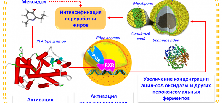 Хемореактомный анализ ЭМГПС
