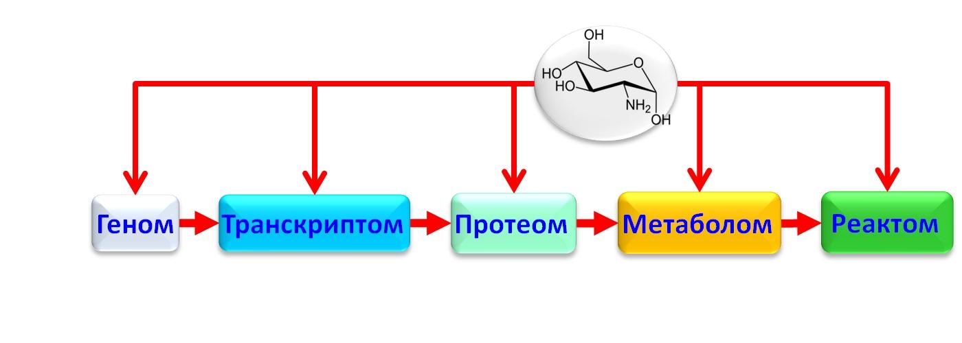 Хемоинформатика в постгеномной медицине