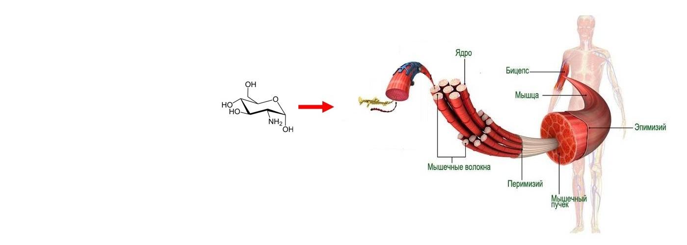 Хемоинформационное моделирование